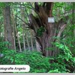 oude bomen