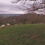 schaapjes op heuvel